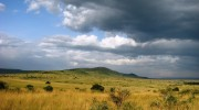 A Kenya Wildlife Safari